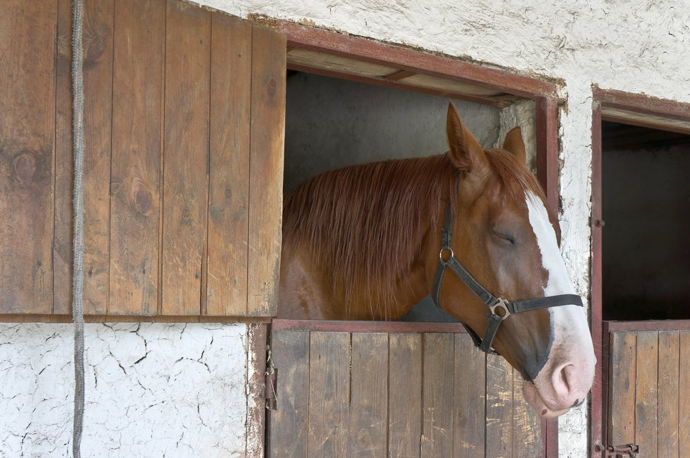 Calm horse in stable