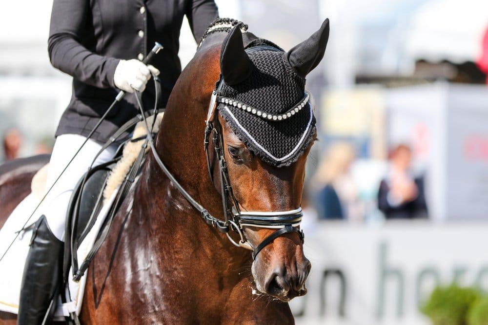Horse wearing dressage bridle