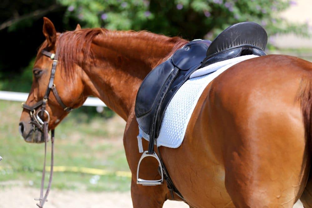 Horse wearing dressage saddle pad