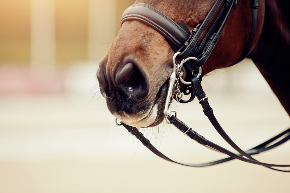 Types of horseriding bridle
