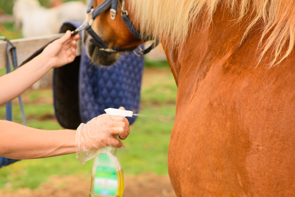 Fly repellent for horses