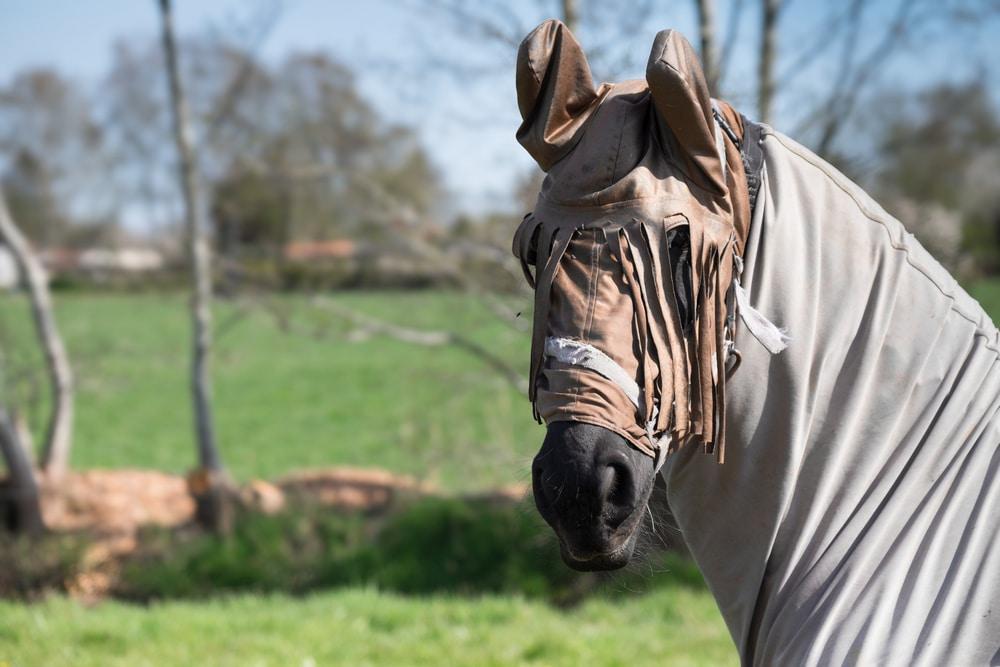 Horse wearing fly sheet