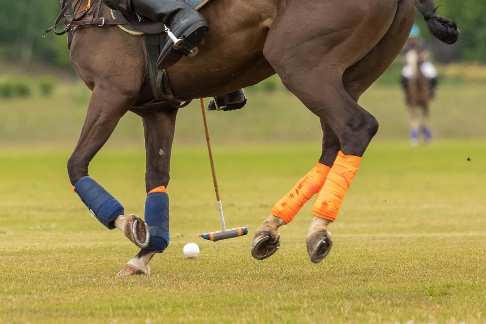 Horse polo bandages