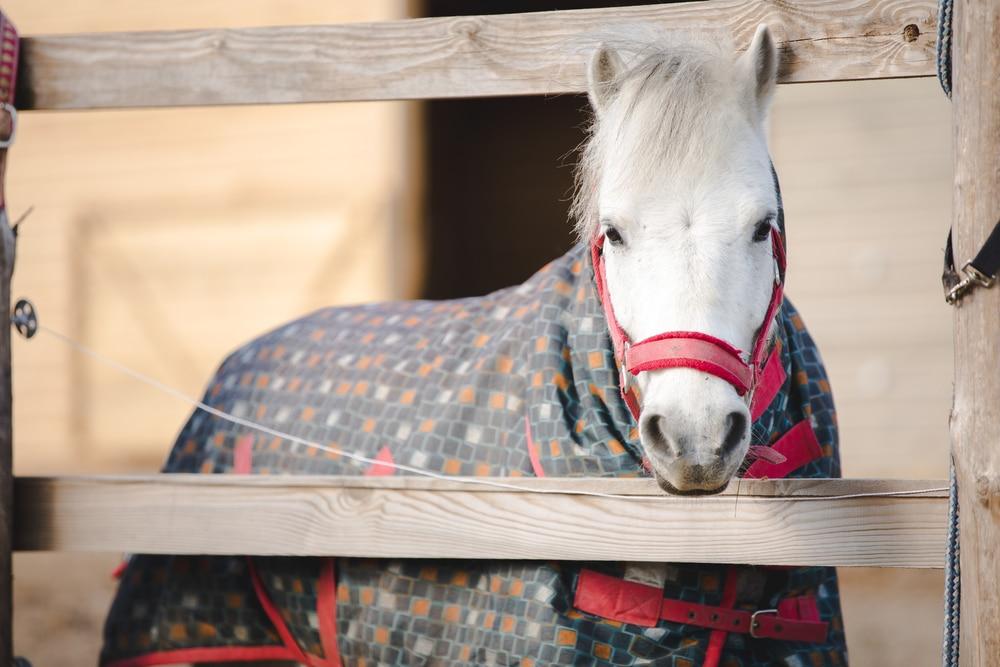 Pony wearing blanket