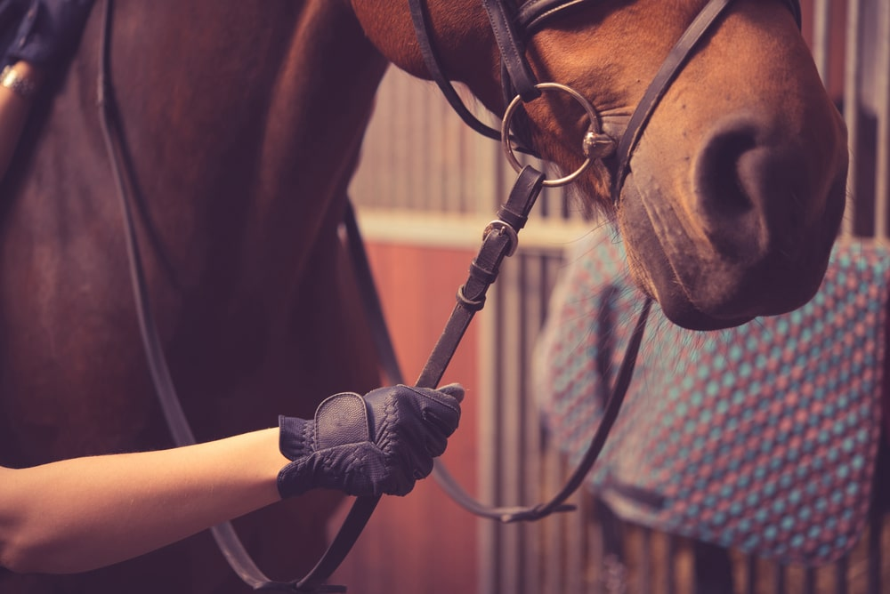 Winter horse riding gloves