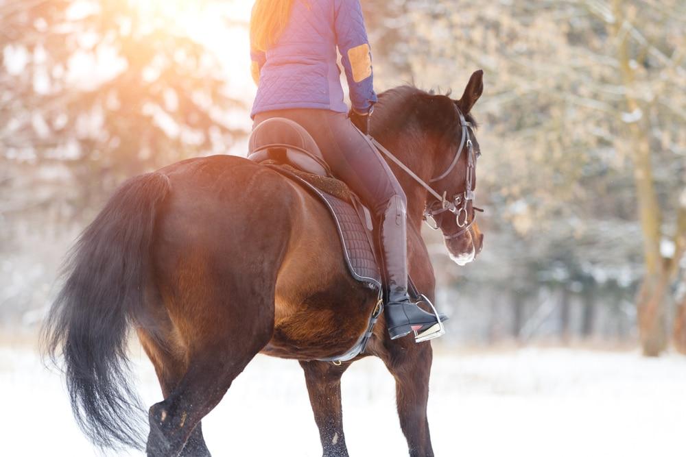 Winter riding breeches