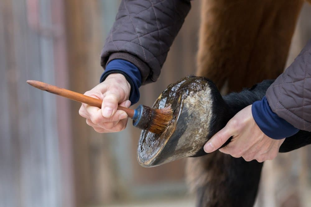 Application of horse hoof care product